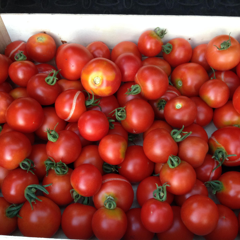 tomaten selber ziehen tomaten selber ziehen so gelingt 39. Black Bedroom Furniture Sets. Home Design Ideas